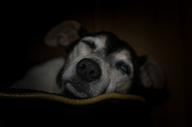 dog-2183114_640