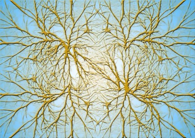 neurons-582052_640